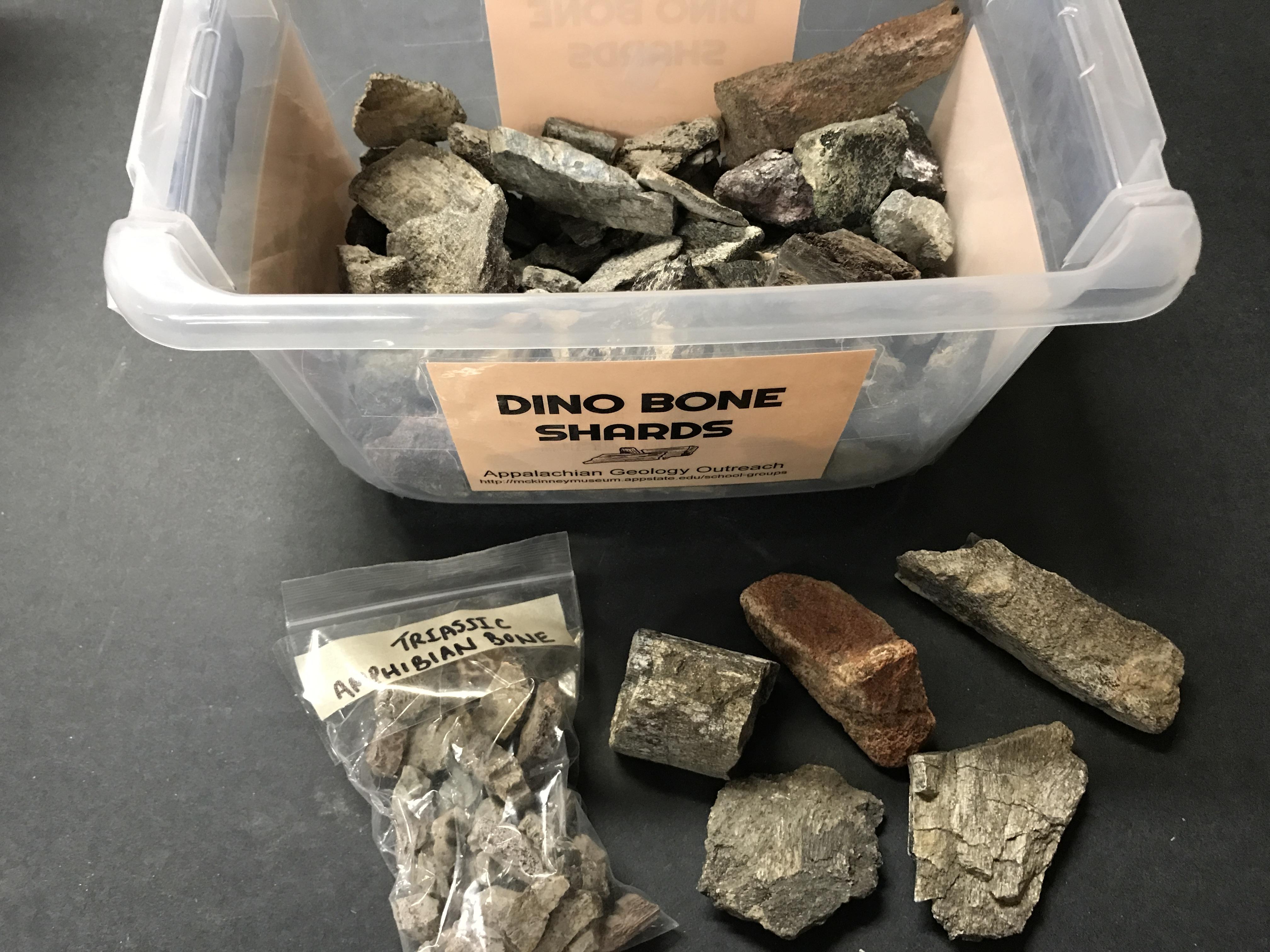 Dinosaur Bone Shards