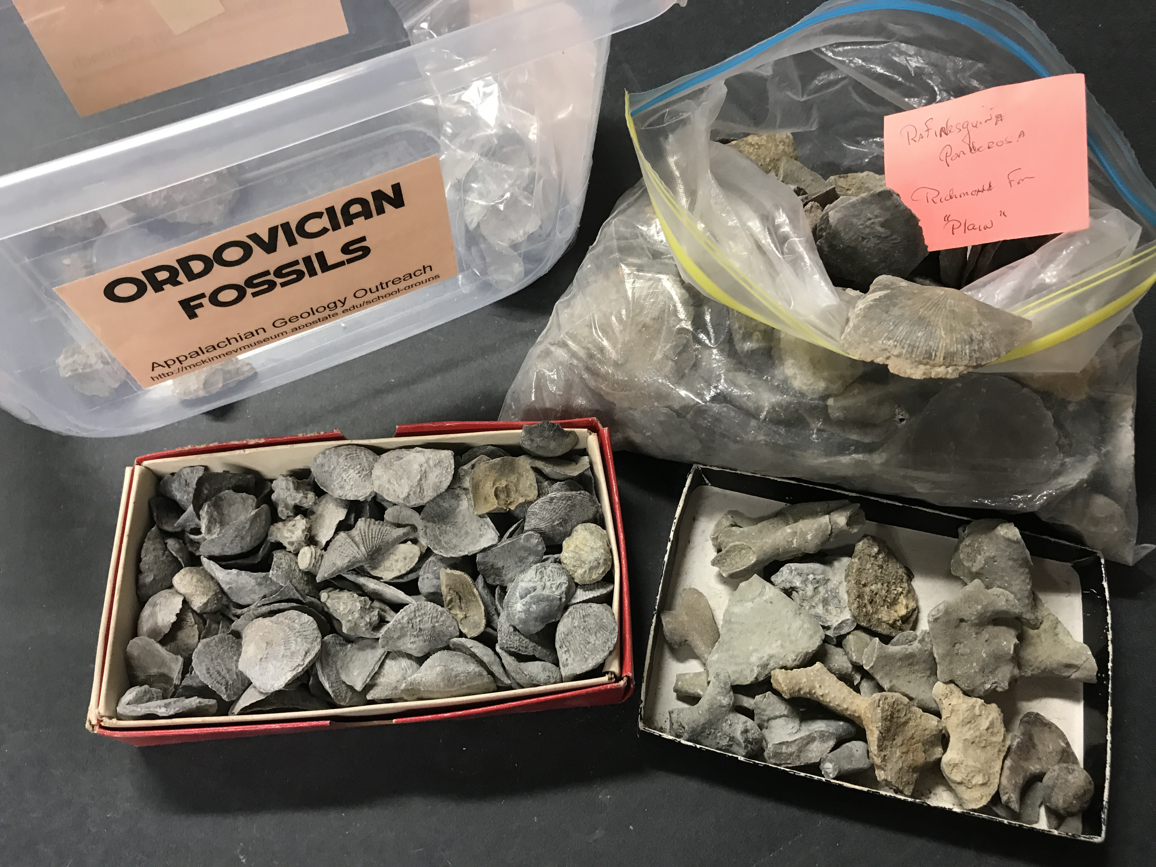 Ordovician Fossil Samples
