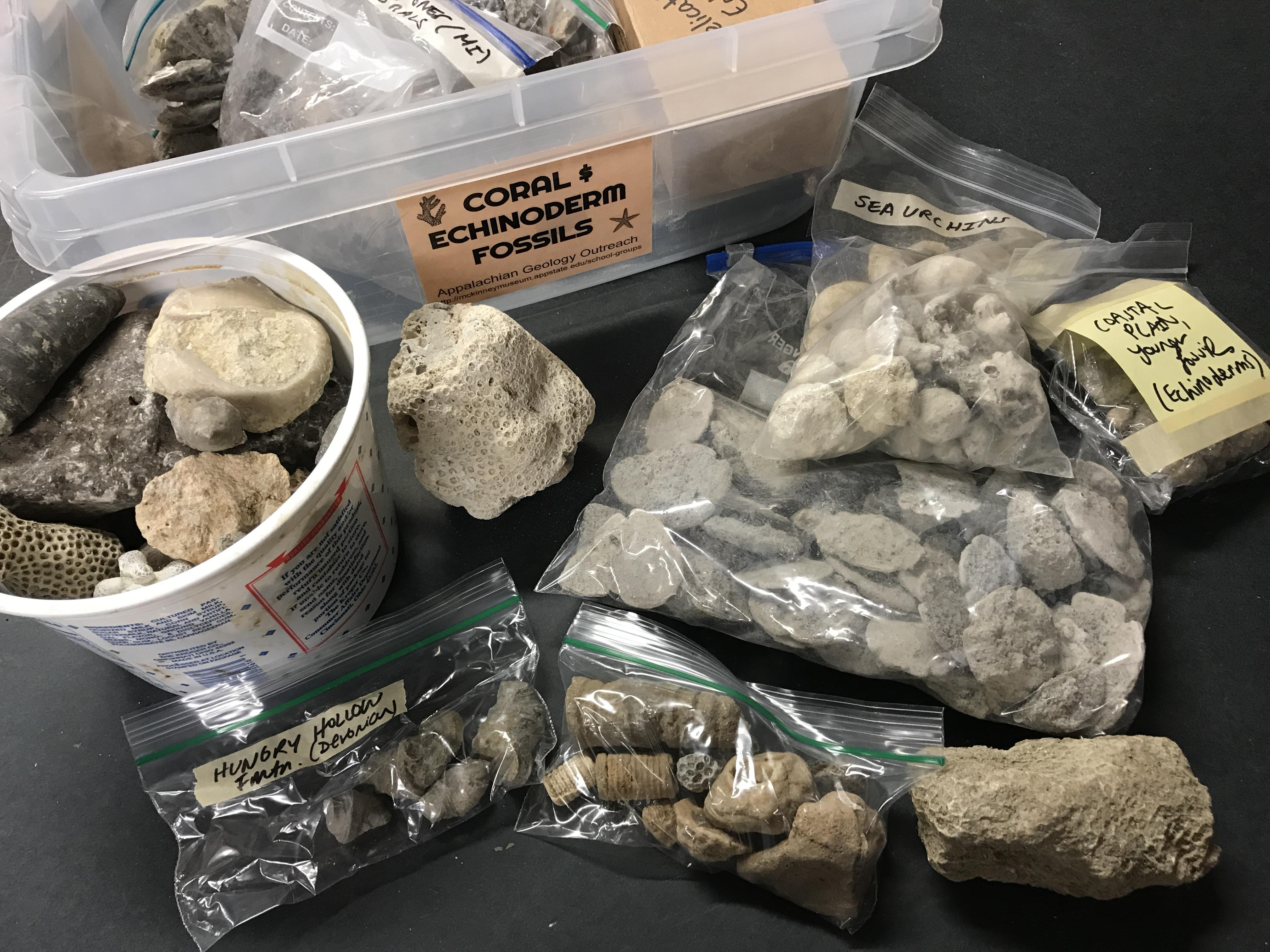 Echinoderm & Coral Fossils