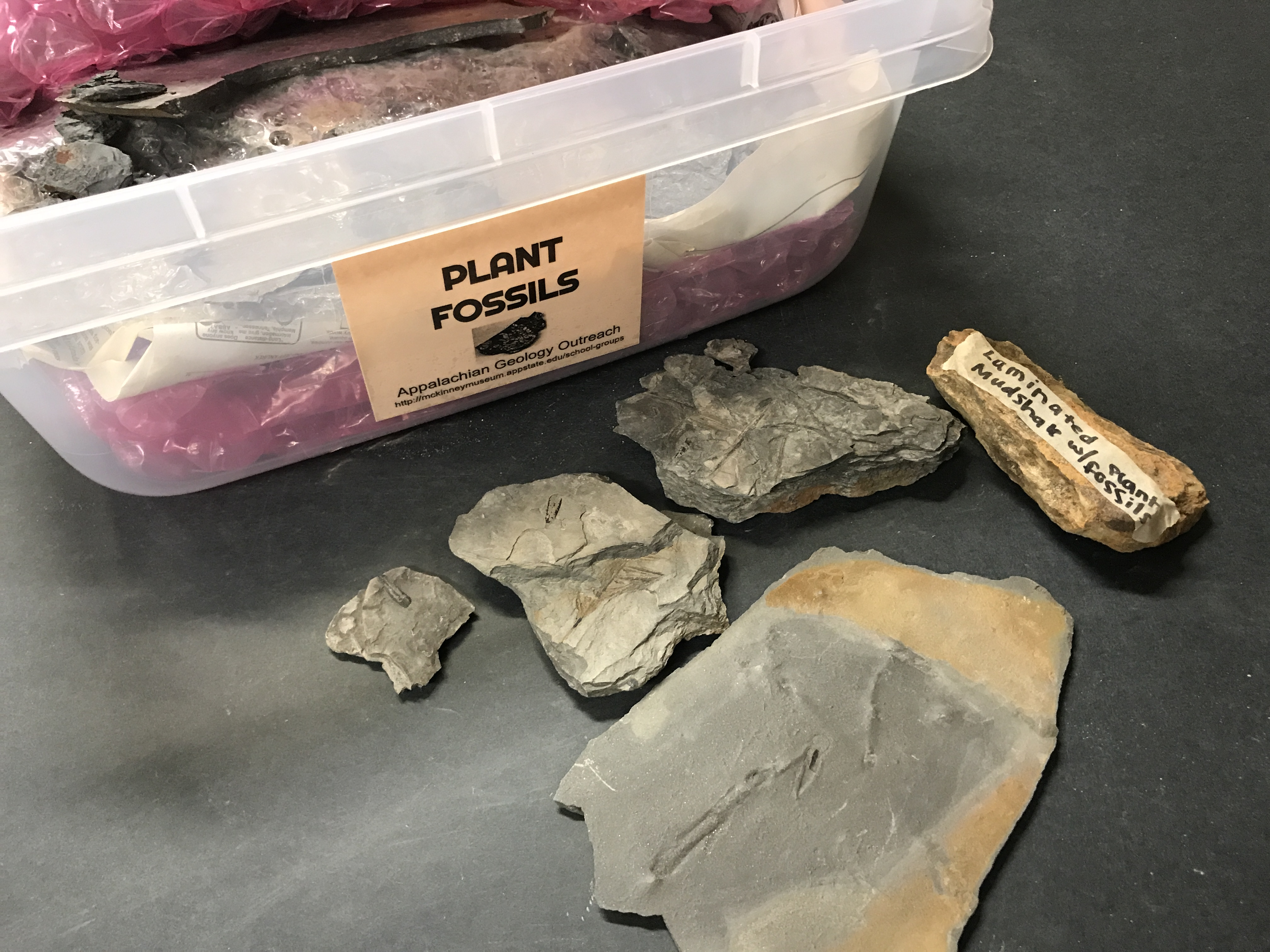 Plant Fossil Samples (Various)